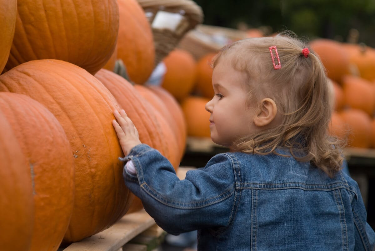 Kid walking near pumpkins