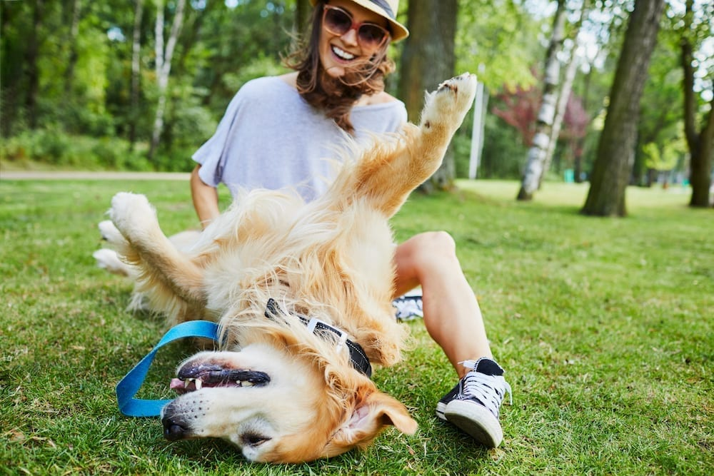 Explore the NYC Suburbs with Your Four-Legged Friends