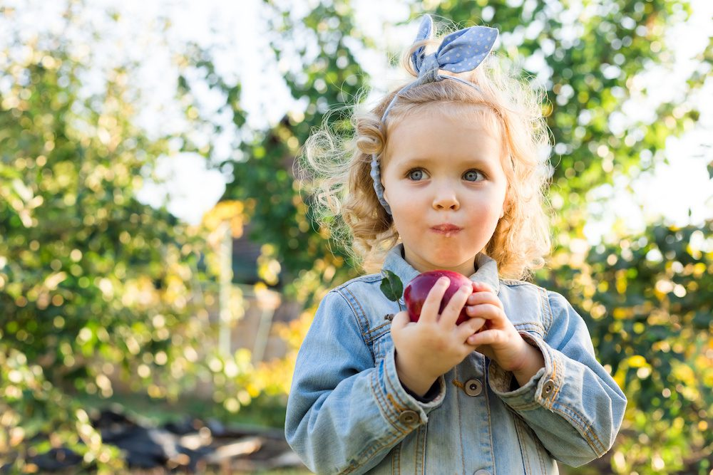 Best Places for Apple Picking in the NYC Suburbs 2021